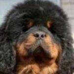 Profile photo of Trustinremprotonmail.com